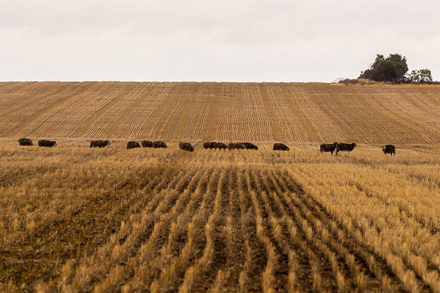 Agribusiness 2021