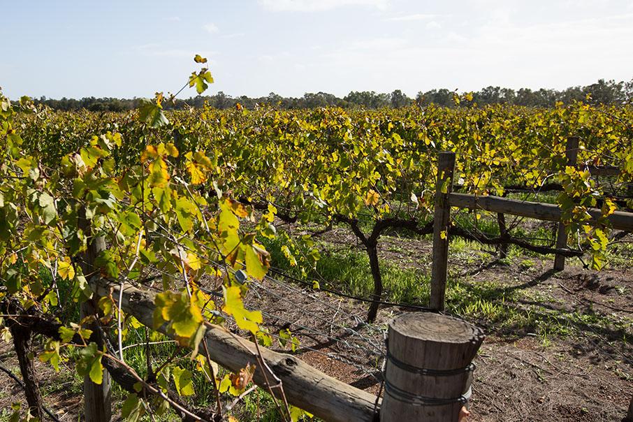 Wineries 2021