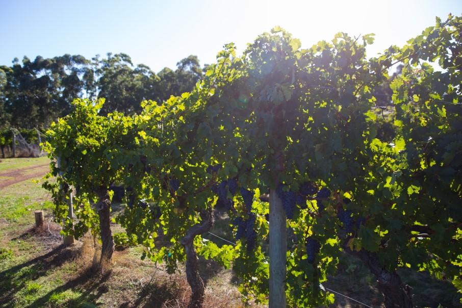 Wineries 2020
