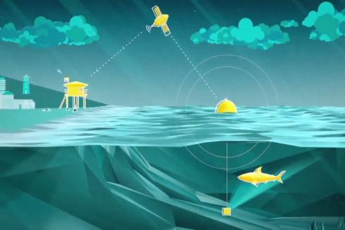 Shark Mitigation Systems hit US market with anti-shark tech