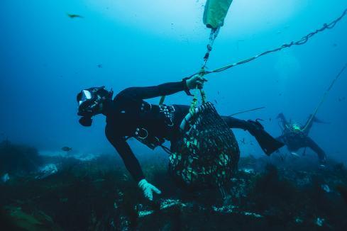 Abalone, Huon deals boost WA aquaculture