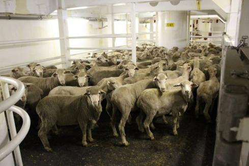 Live export summer ban approved