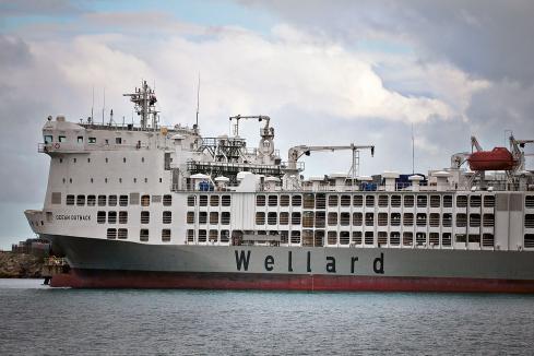 Wellard posts maiden profit but urges caution