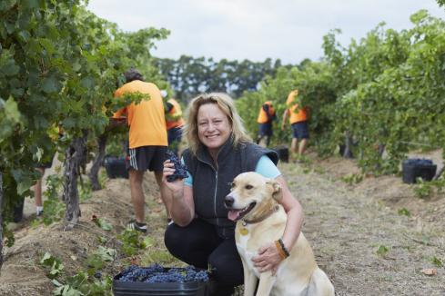 Margaret River wineries recognised at Halliday awards