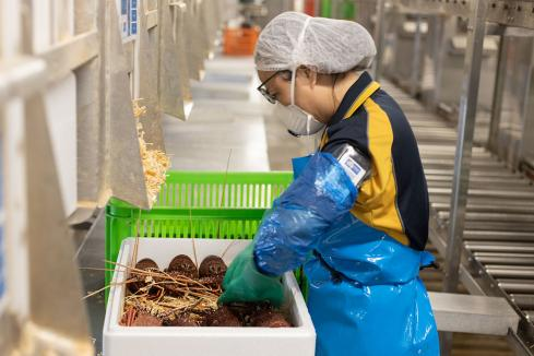 From ocean to plate, it's favoured in Asia