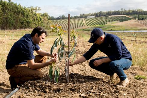 Agriculture emerges as safe haven