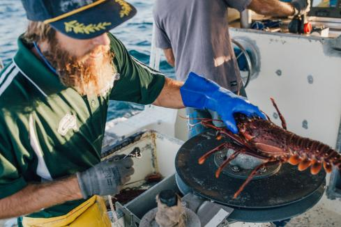 Lifeline for lobsters with federal freight deal