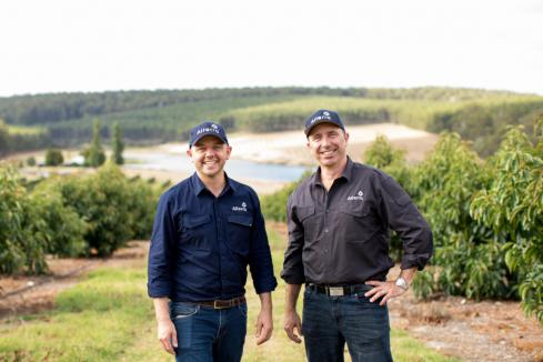 Alterra, Casotti Group partner on 300ha orchard