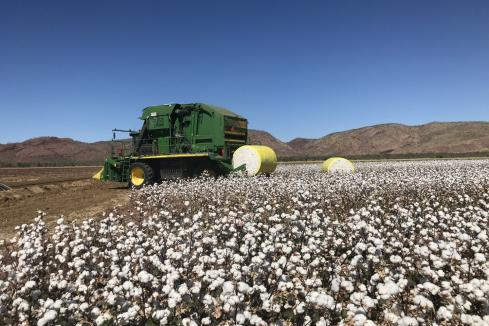Ord cotton plan gets boost