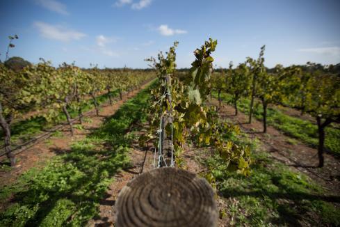 Wilyabrup wine region decision suspended