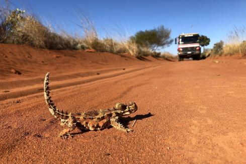 White Cliff gets dirty in Paterson Province