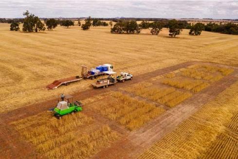 Lithium Australia harvests  battery waste as fertiliser