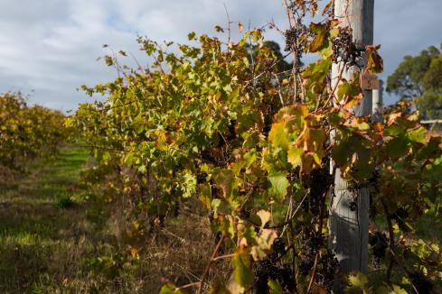 Liquidator wins fight to sell winery assets