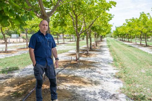 Developers realise tree change opportunity
