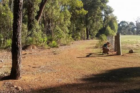 Emu stalks Sunfire nickel-PGE targets