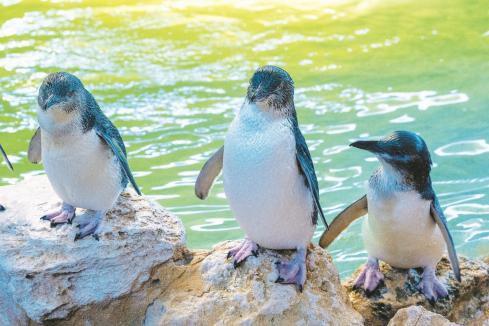 Rockingham grounded on penguin plight
