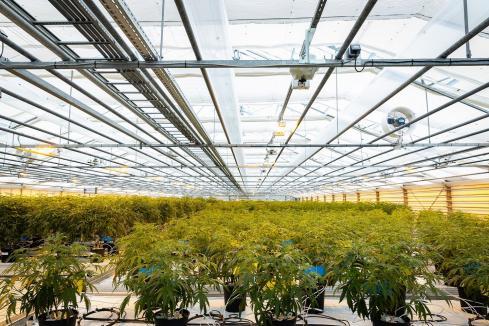 Rinehart invests $15m in Little Green Pharma