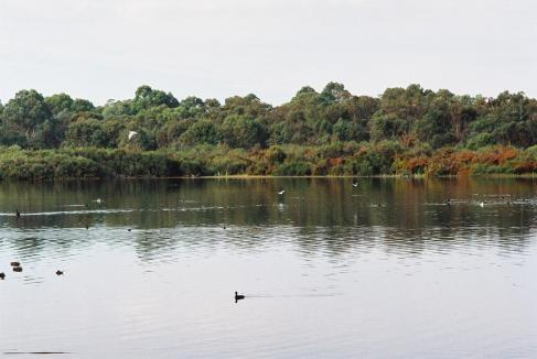 Chevron donates $3m to wetlands projects