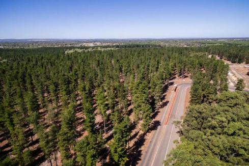 Construction industry gets timber boost