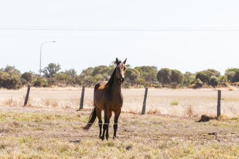 Five jockeying for Perth Racing board