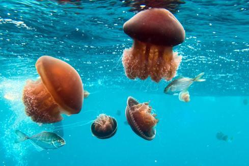 WA marine lab to examine reef impacts