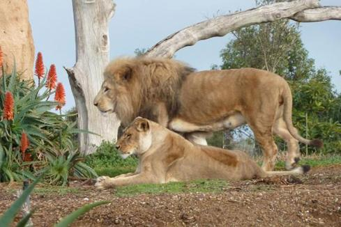 Site found for WA's first open-range zoo
