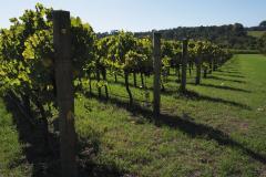 Spirit revives as wine returns to balance