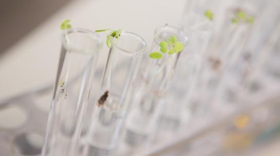 MGC Pharma swamped in Cannabis capital raise