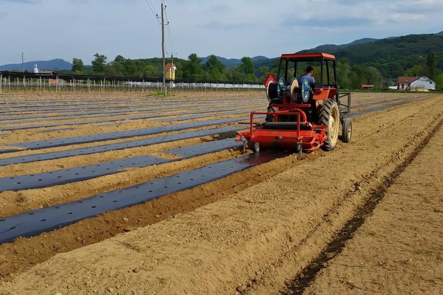 MGC Pharma breaks ground with planting of first Marijuana crop