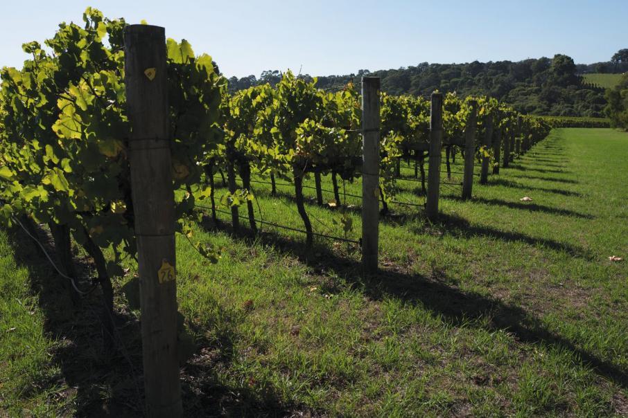 Aust wine exports to China pass $1bn