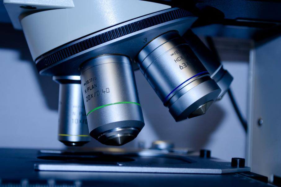 Phylogica to start animal testing this month