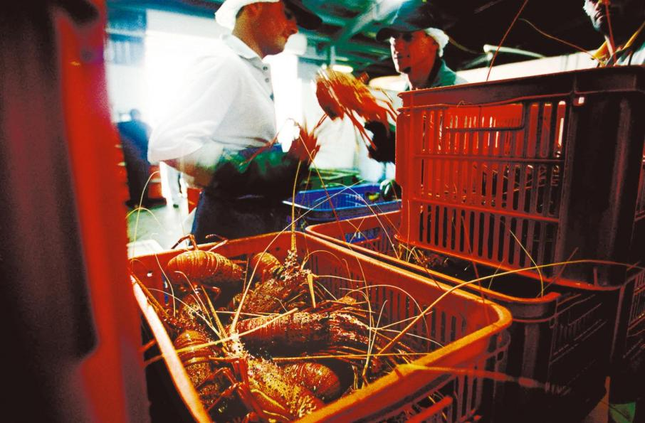 Craying foul: fishing sector pays for past policy mistakes