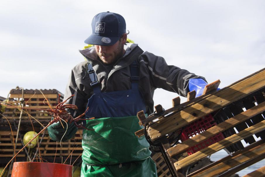 Government blind in $70m lobster move