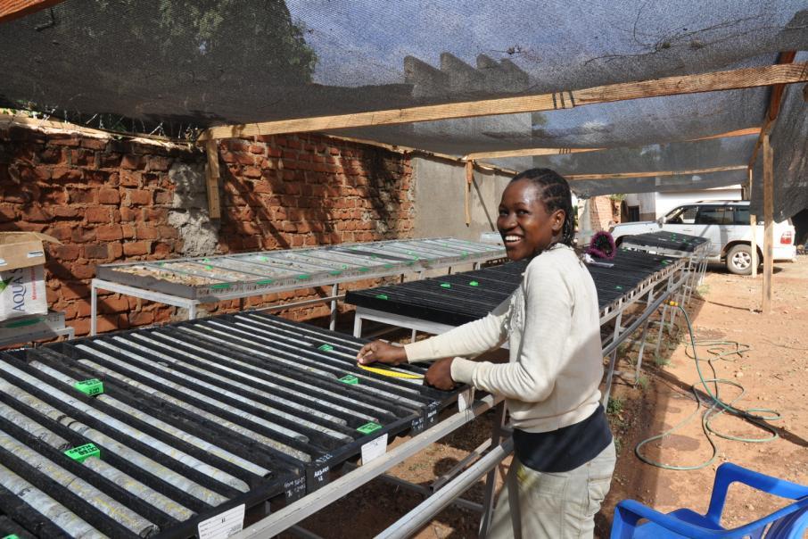 Sipa closes in on nickel-copper elephant in Uganda