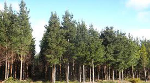 Alterra banks $3.2m from NZ carbon forestry assets