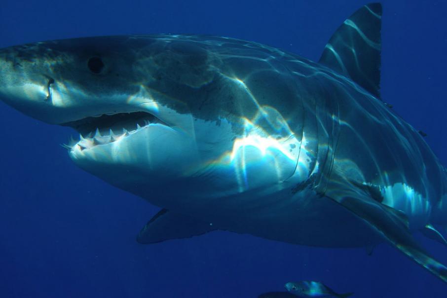 Shark Shield reaches top spot on Techboard ladder