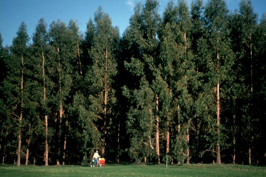 Private timber plays paying out for Japanese owners