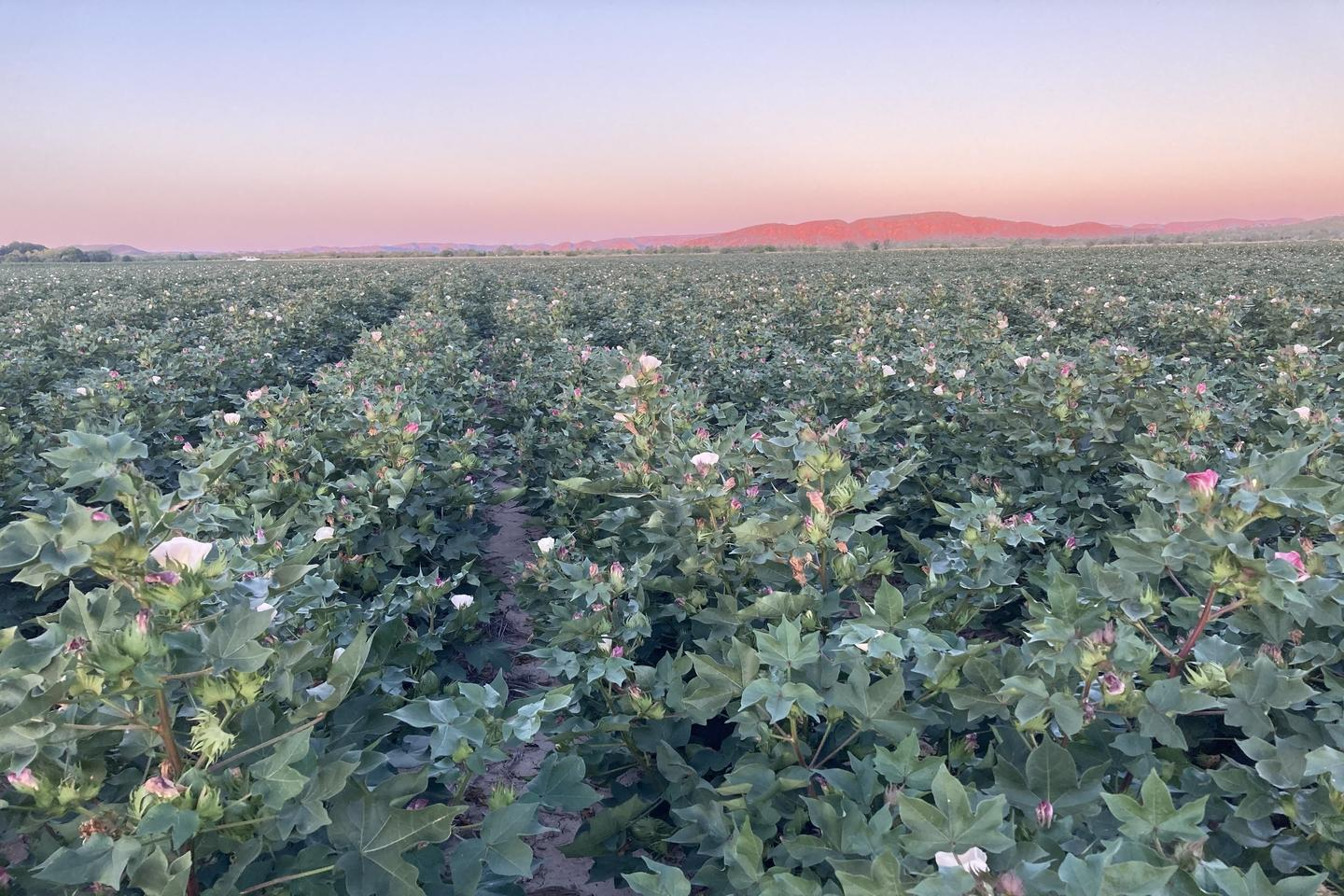 Cotton gin gets $4m boost